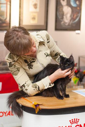 """Международная выставка кошек AFC """"Удивительные лесные кошки"""", 1 марта 2014 г. Сургут 0_b25c7_e78ac975_L"""