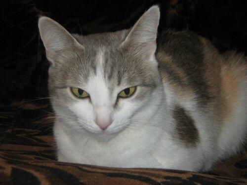 А у меня живет кошка... - Страница 2 0_da1f1_f197cff4_L