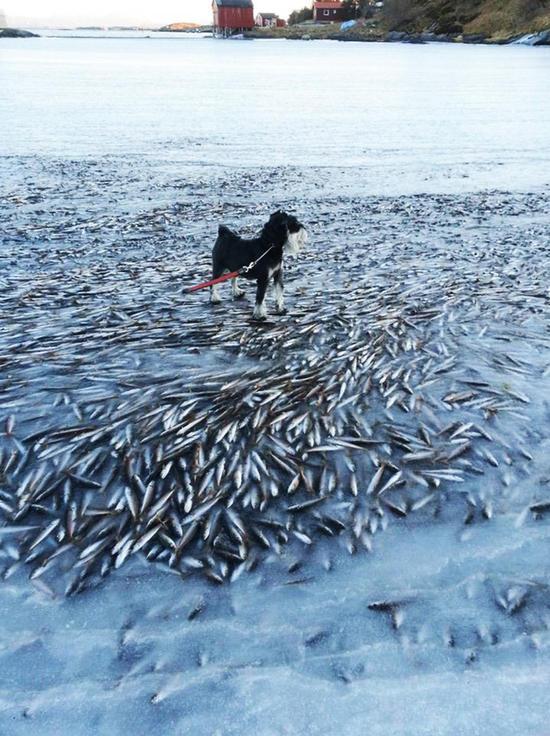 рыба замерзла