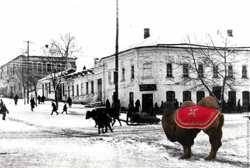 Послевоенный Белгород. Перекресток Попова-Фрунзе. Современный верблюд - с фото В.Корнева