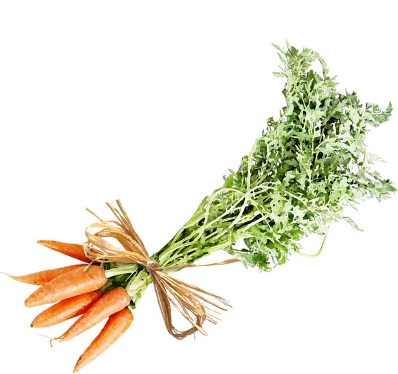 catherinedesigns_LittleGarden_carrots2.png