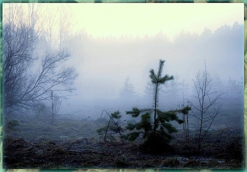 Природа, пейзаж, фото из интернета (172).jpg