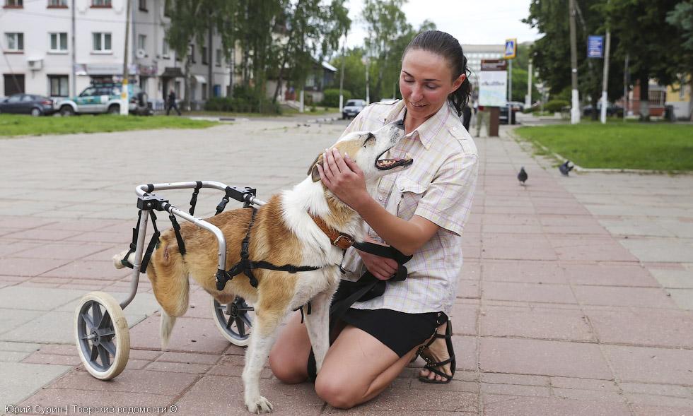 Собачка на колёсиках, Тверь, помощь животным, бездомные собаки