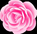 роза62.png