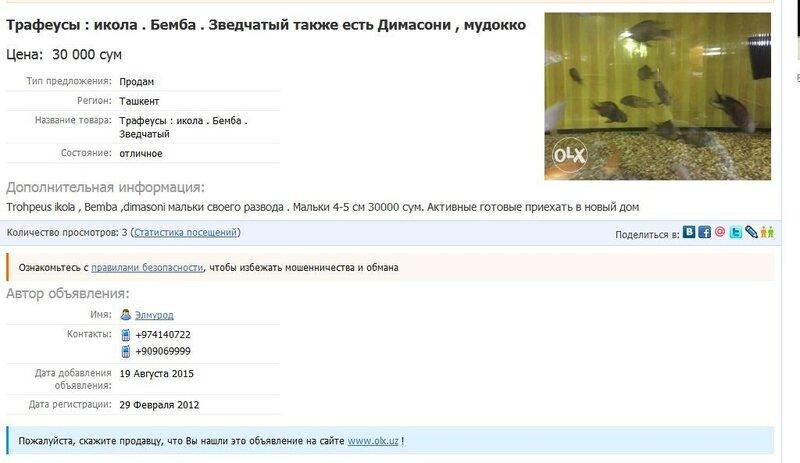 0_196c95_6eba5c1c_XL.jpg