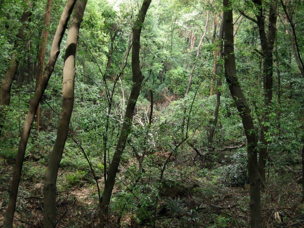 Тропические заросли на горе Мошань