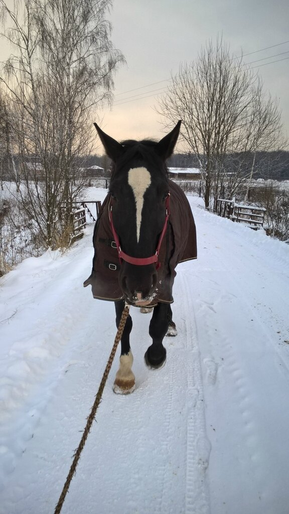 Послушный конь