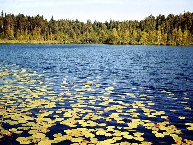 Лебединое озеро, Кульбашские озера