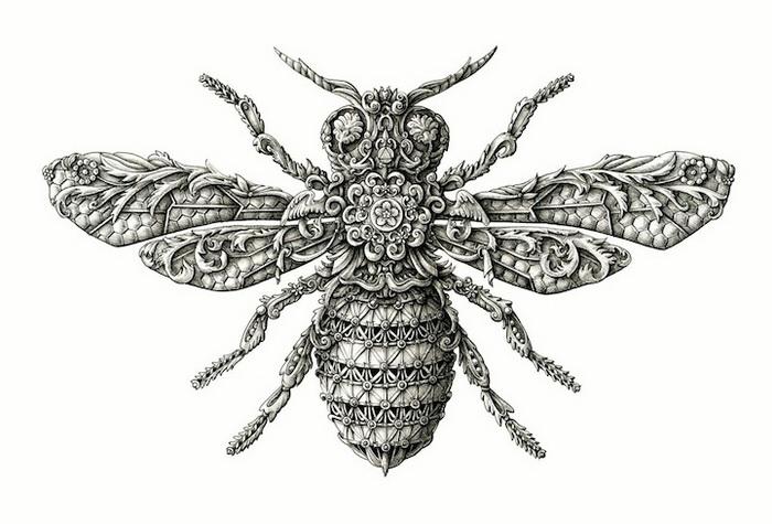 Рисунки и картинки насекомых