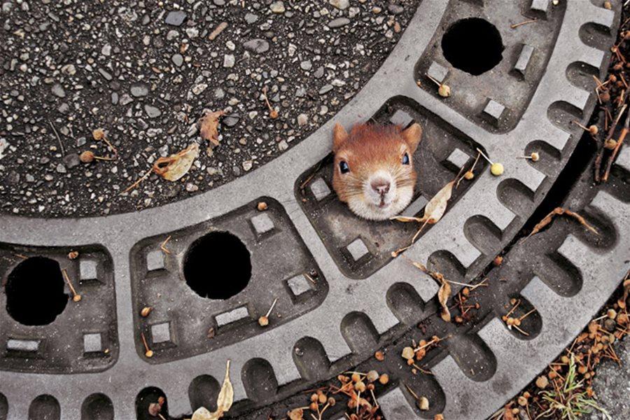 Фото этого месяца присланные в журнал National Geographic