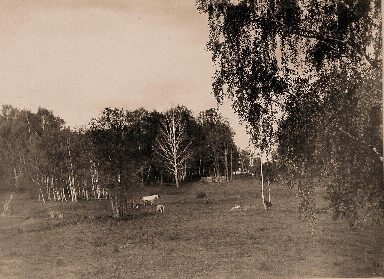 Вид на лес и поляну с пасущимися лошадьми за парком Шереметевых