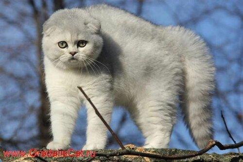 http://img-fotki.yandex.ru/get/9767/131941824.e/0_145978_8f5fb781_L.jpg
