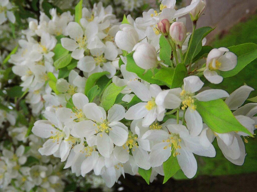 Весна в Меррилле.
