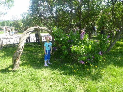 Сиреневый сад.