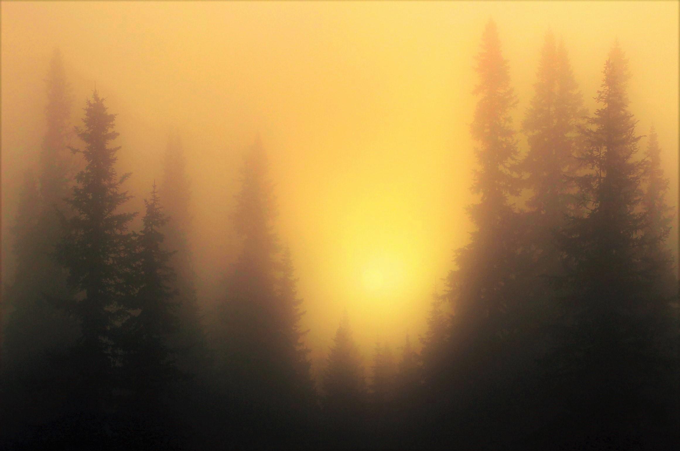 В утреннем мареве тумана