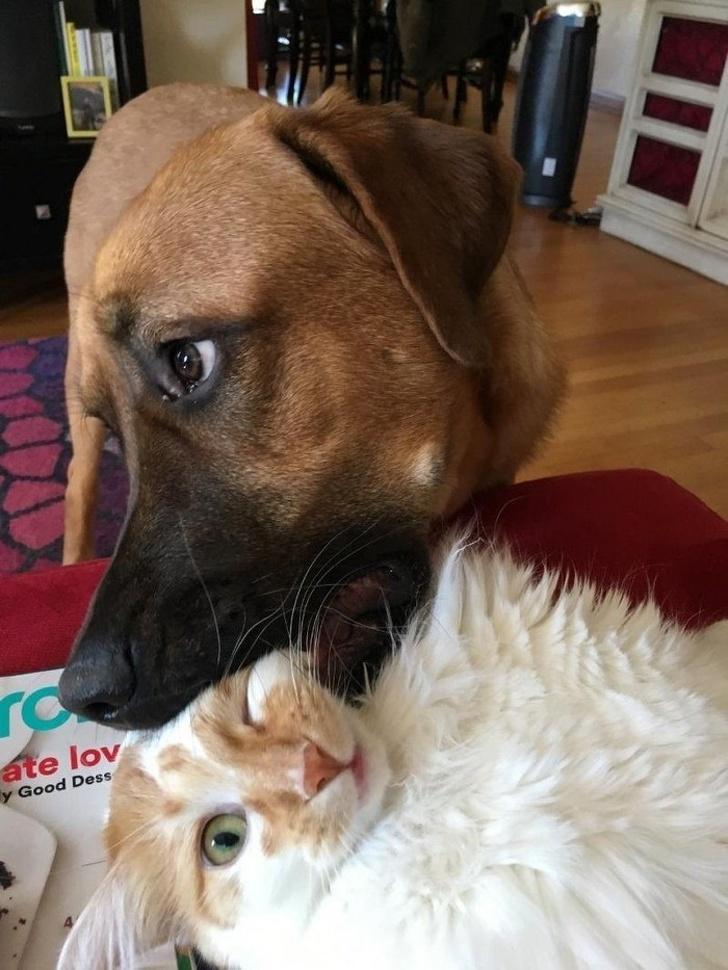 фото животных 2017 домашние питомцы фотографии животных домашние животные фото с животными подборка