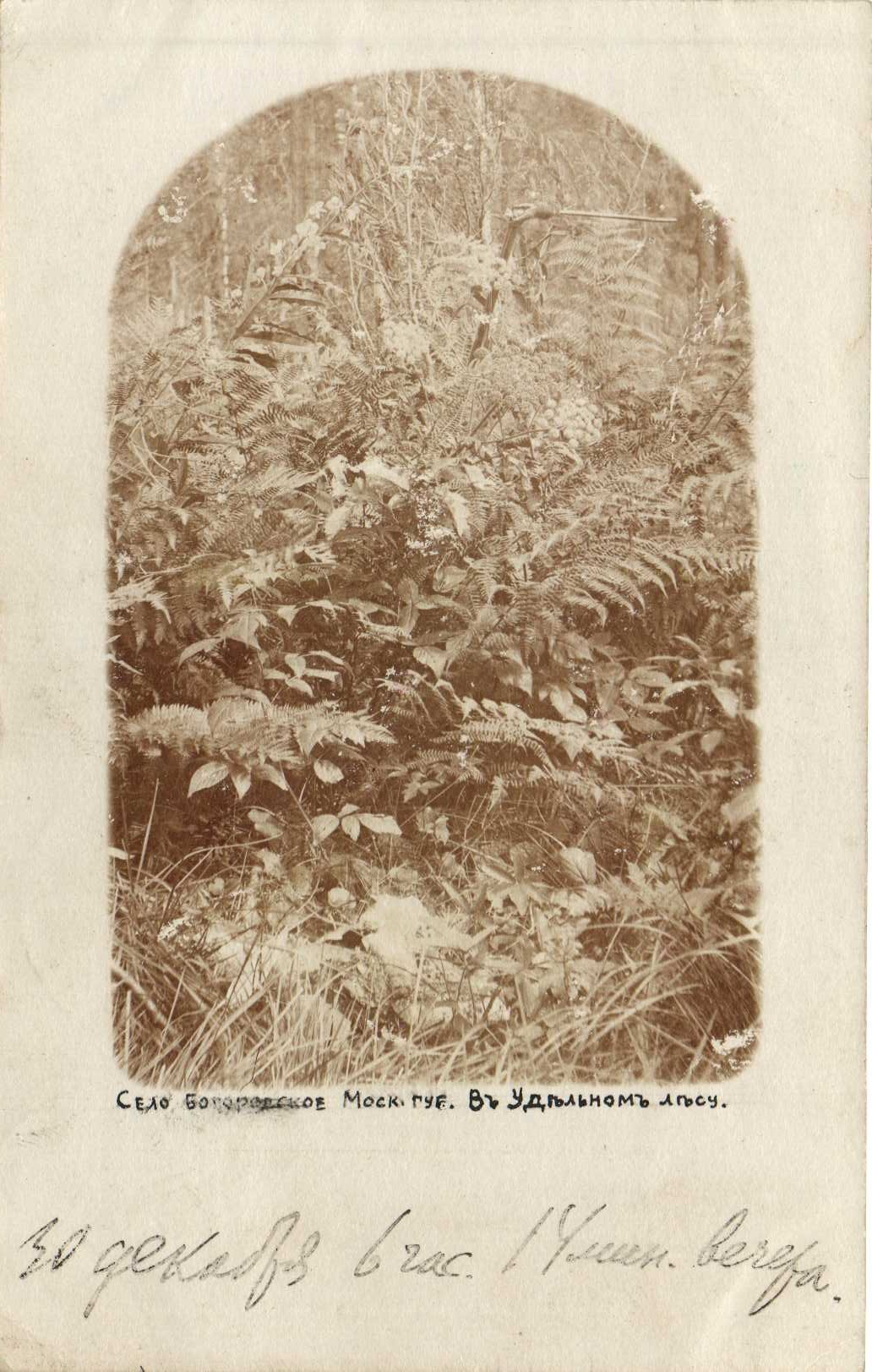 В удельном лесу