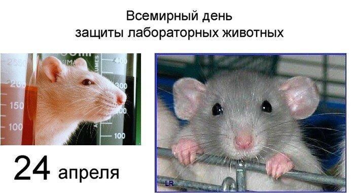 24 апреля ● Всемирный день защиты лабораторных животных и не только...