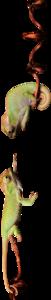 хамелионы