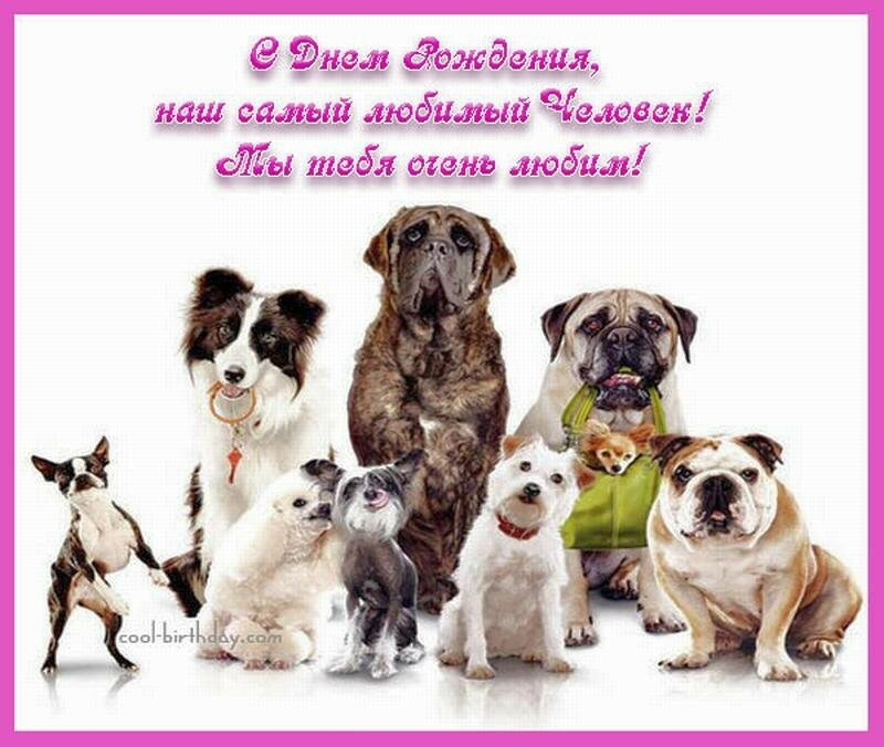 Поздравления на день рождения ветеринару