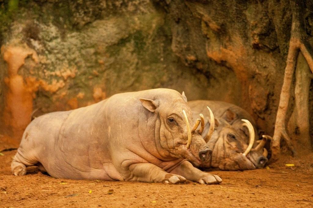 На уроках биологии такого не расскажут: редкие животные (10 фото)