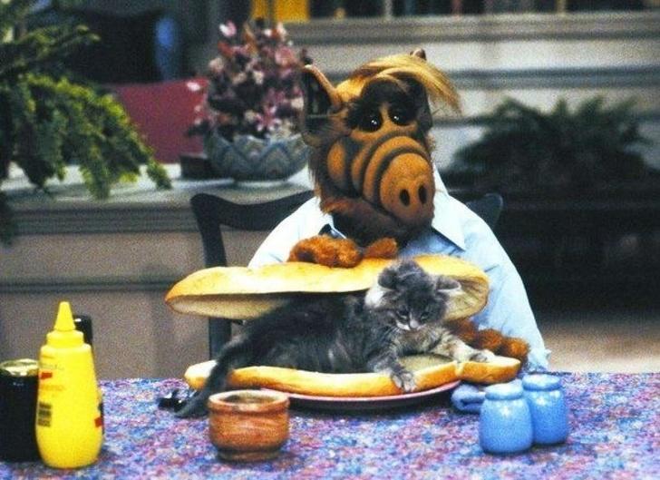 11научных объяснений, почему мыживем наусловиях кошек. Аненаоборот (13 фото)