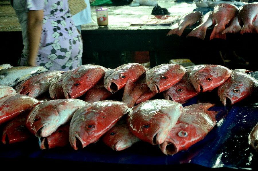 Рыба Город Соронг на Западном Папуа в Индонезии Город Соронг на Западном Папуа в Индонезии 0 1b0fd4 5dfd03ce XXL