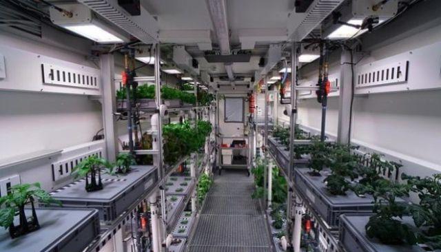 В Антарктиде собрали первый урожай