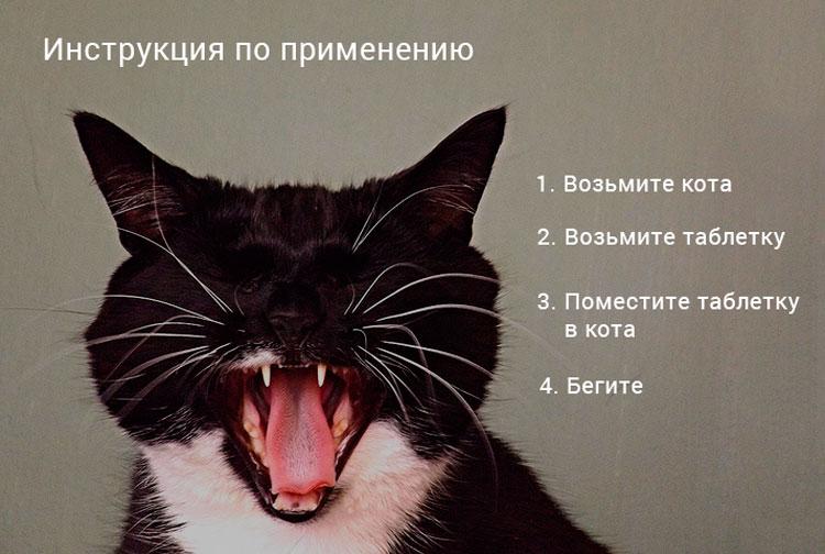 Как дать таблетку коту?