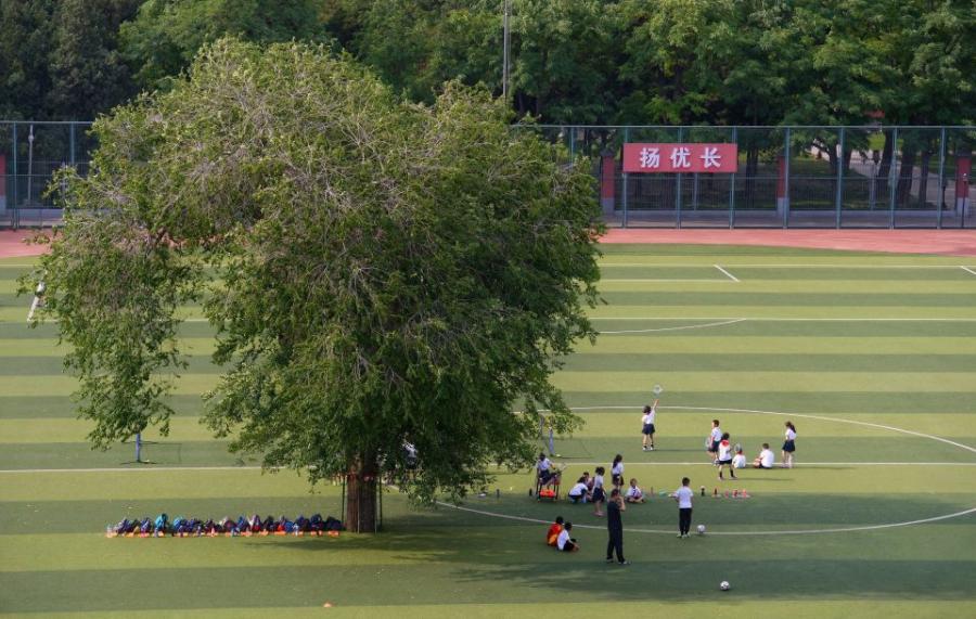 Дерево на футбольном поле