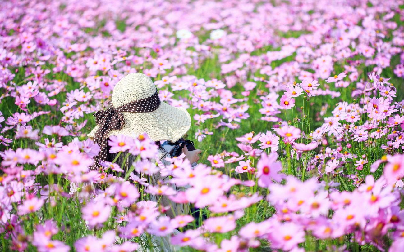 поле, розовые космеи, девушка в шляпе