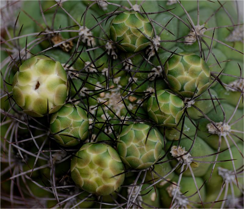 succulente Paola Bottoni