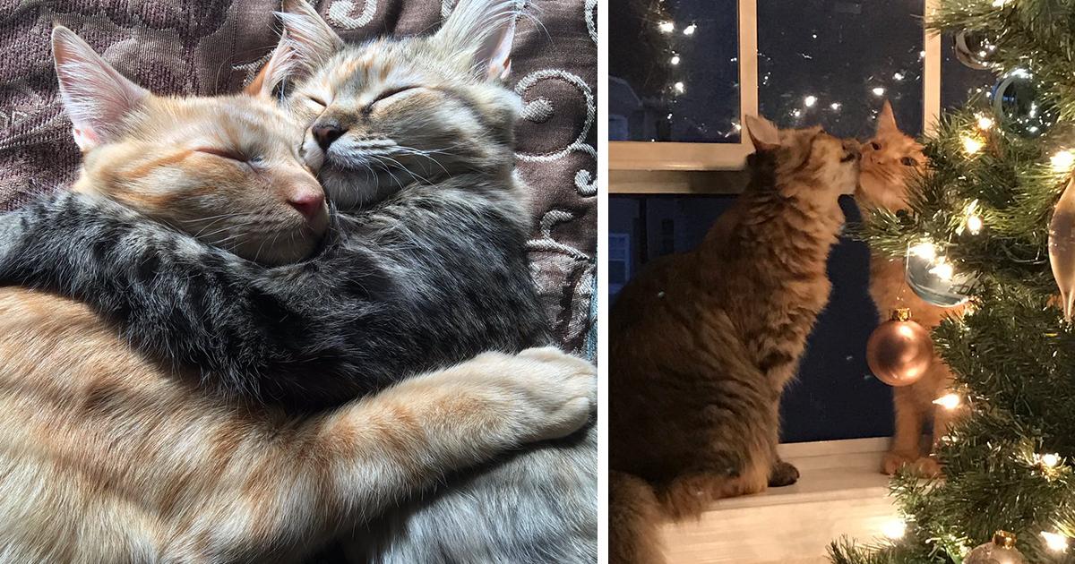 Эта фотография целующихся кота с кошкой у рождественской елки просто свела мир с ума.