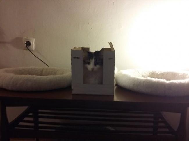 Акак насчет того, чтобы вернуть эту кровать вмагазин икупить мне коробку побольше?