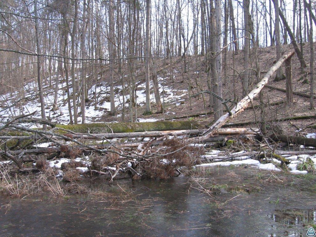 Завалы на озере