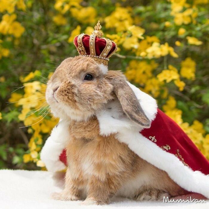 Король среди кроликов
