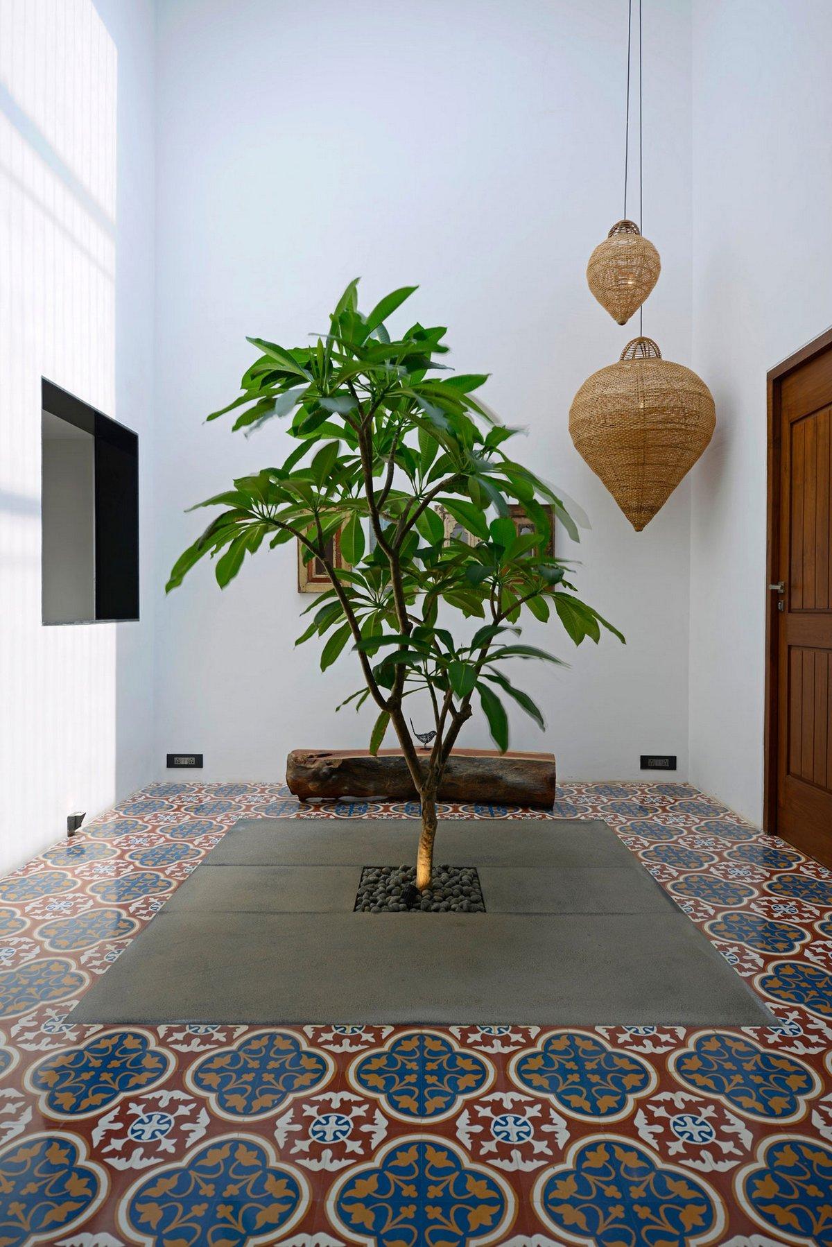 Дерево в полу частного дома