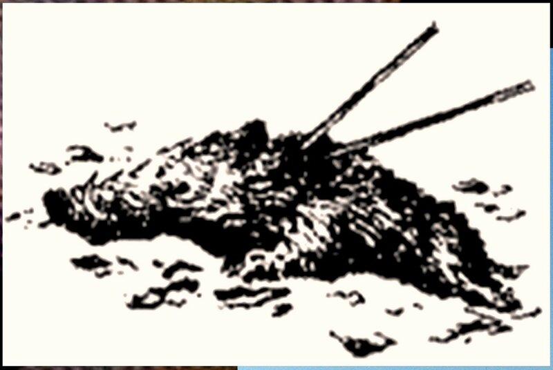 Иллюстрация к книге В.К.Арсеньева Дерсу Узала (28).jpg