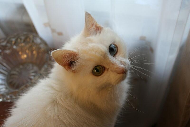 Котенька в день котиков