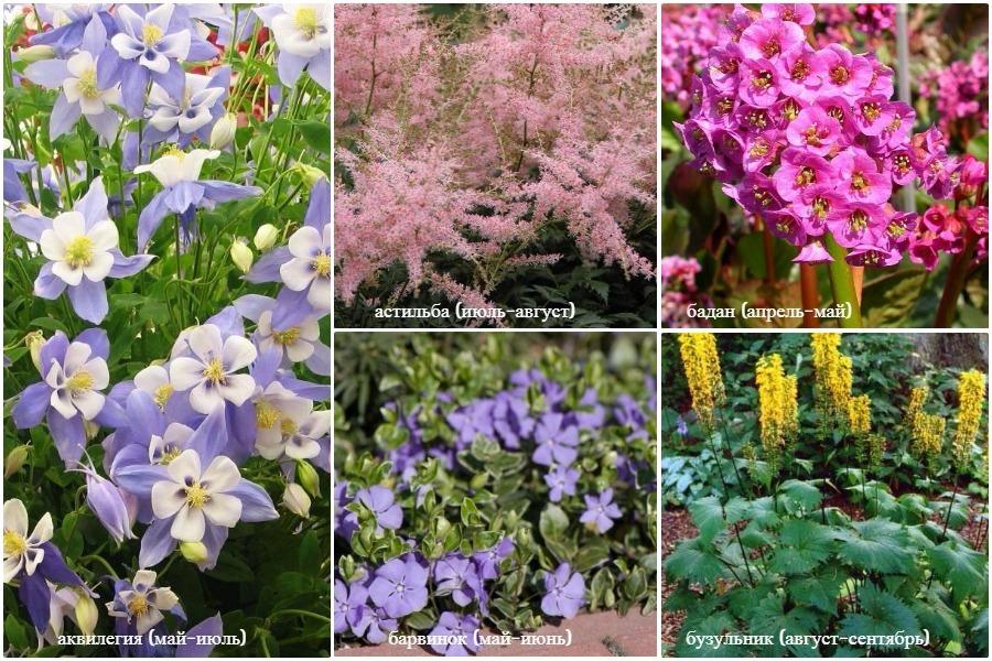 Растения для влажных участков
