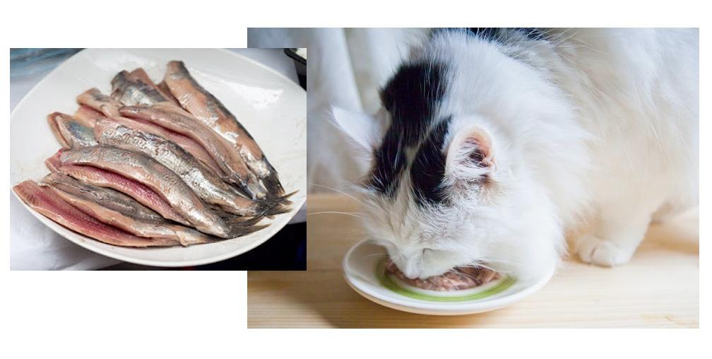 кошка ест рыбу фото