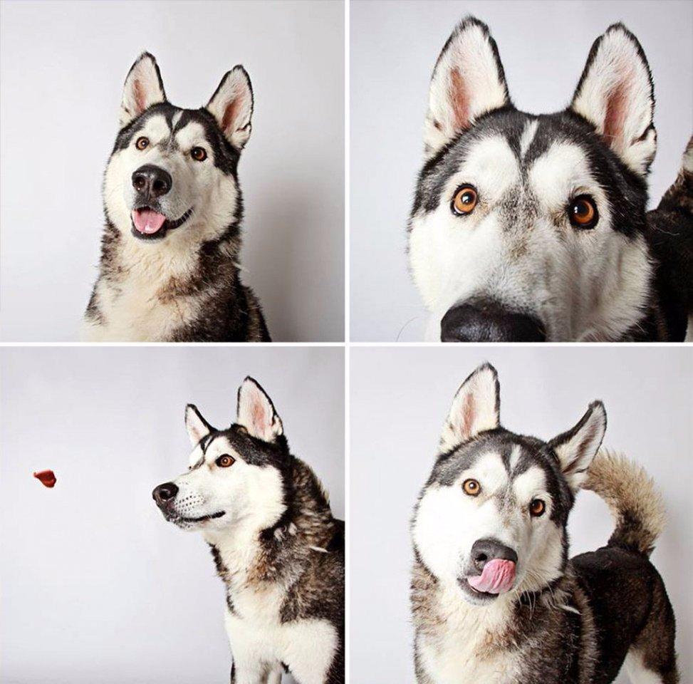 Xочу два! Фотографии — помощь бездомным животным штата Юта (7 фото)
