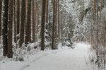Январский лес