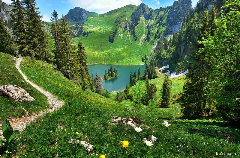 лес и горы, и цветы...