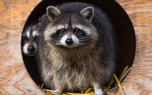 обои на рабочий стол природа и животные