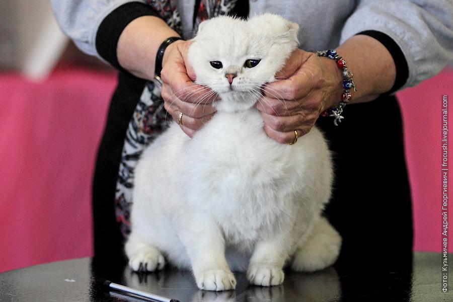 Москва ВВЦ выставка кошек Цветок Сакуры