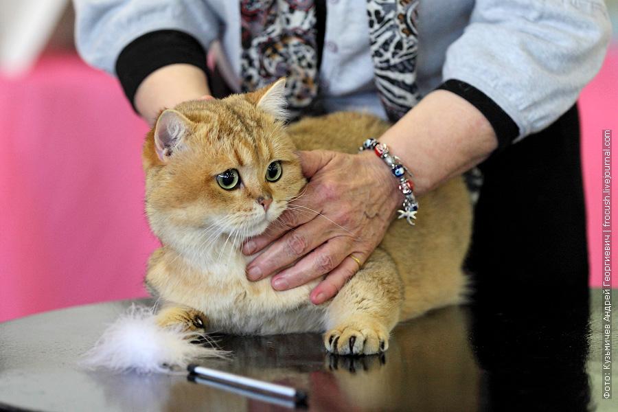 выставка кошек Цветок Сакуры весна