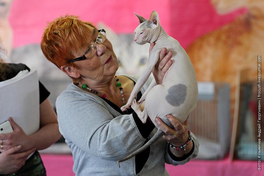 Донской сфинкс кошка выставка