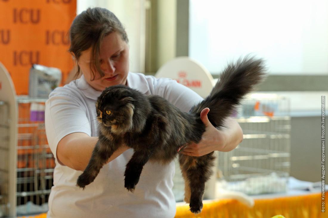 фотографии котиков