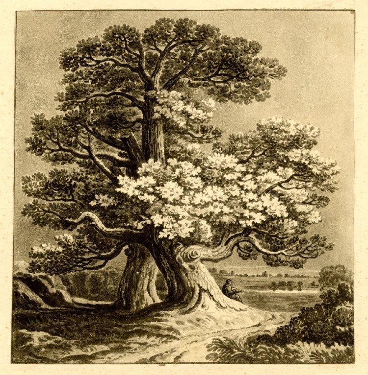 Дуб.  Печать Джошуа Gleadah после Джона Варли, 1818 .. JPG